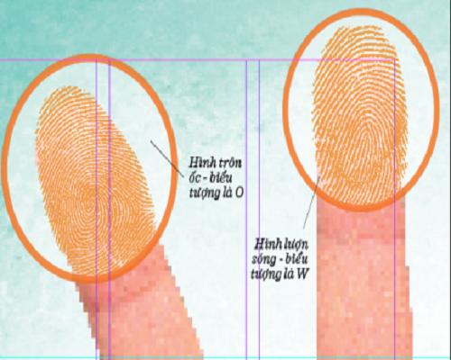 Cách xem vân tay cho đúng