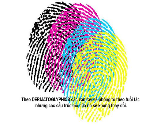 Sinh trắc vân tay Intelgen Dermatoglyphics