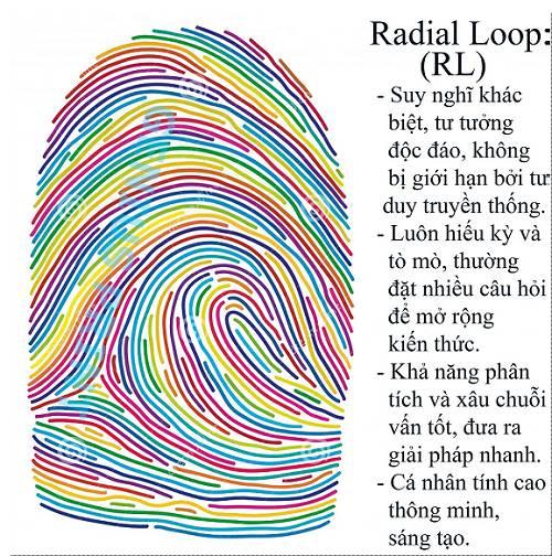 Radial Loop - người có khả năng sáng tạo mạnh mẽ