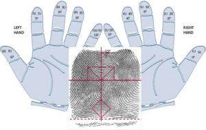 Sinh trắc học dấu vân tay được ứng dụng cho trẻ em