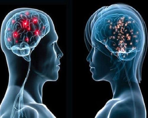 Khám phá những bí ẩn của bộ não con người