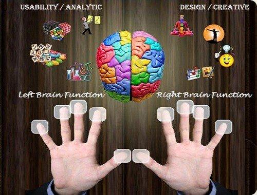 Não bộ và dấu vân tay có mối liệ hệ rất mật thiết
