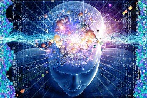 Não bộ là cơ quan phức tạp trong cơ thể người