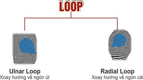 Hình dáng chủng LOOP