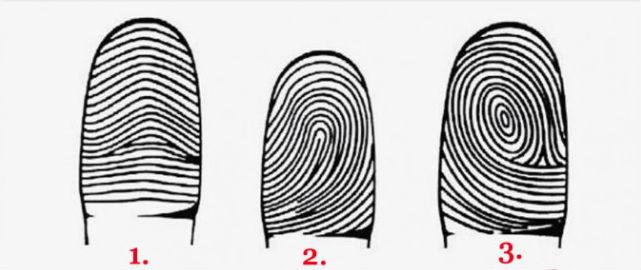 3 nhóm vân tay chính (Từ trái qua: Arch - Loop - Whorl)